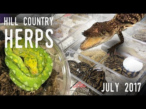 CRESTIES, COBRAS, AND CROCODILES! | Hill Country HERPS Exotic Pet Show