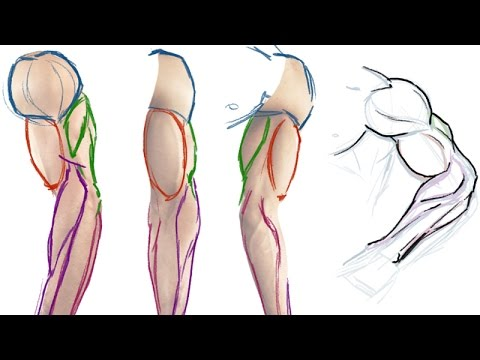 How to draw the Muscles of the Arm (Simple Anatomy Tutorial)