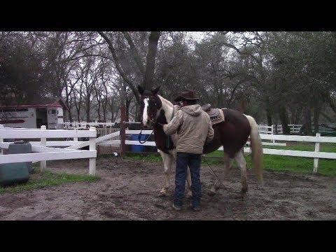 Training Tip, Forward Cue, Mike Hughes, Auburn California