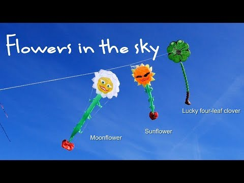 Flowers in the sky - kite flowers, that is!