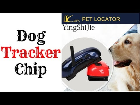 Dog Tracker Chip