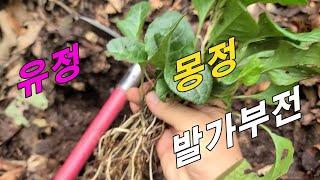 유정, 몽정, 살아있는 식물 천연비아그래~!