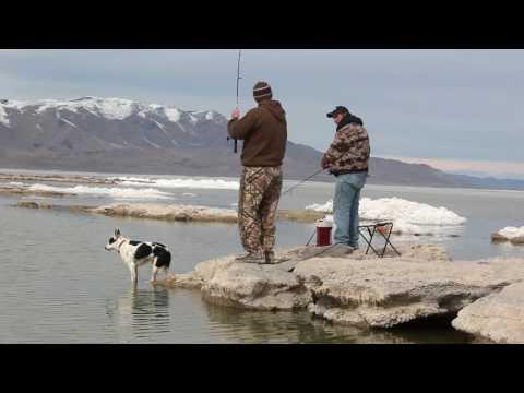 early season fishing on Utah Lake