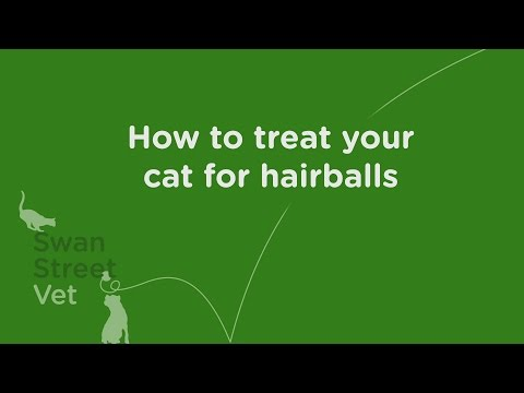 How to treat your cat for hairballs