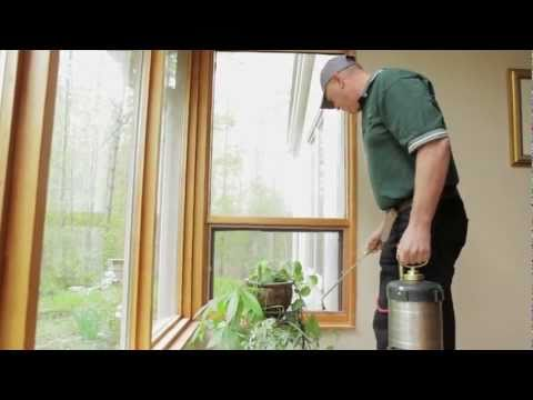 Carpenter Ants ~How to get rid of Carpenter Ants & Ant Prevention