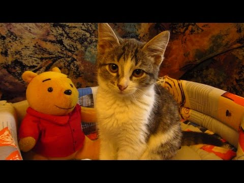 Kitten to the veterinary clinic after vomiting and diarrhea