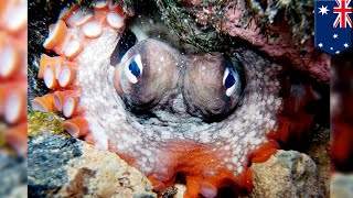 Octopus city: