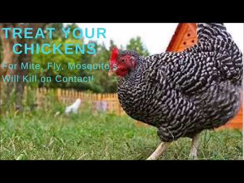 TREAT YOUR CHICKENS FOR MITES, MOSQUITOS, FLYS INSECT FREE CHICKENS