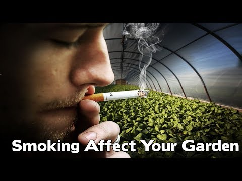 How Smoke Can Affect The Plants In Your House