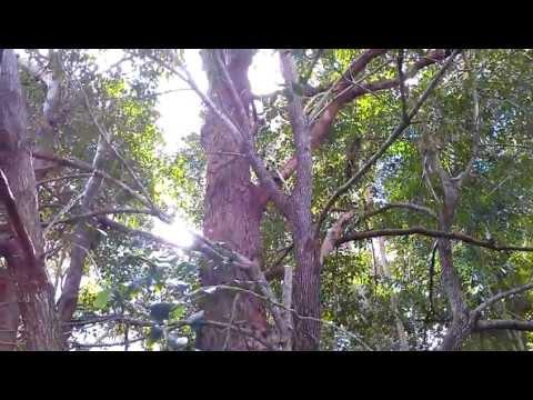Termites Kill Tree