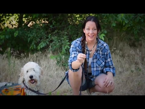 Dangers That Threaten Dogs on the Hiking Trail