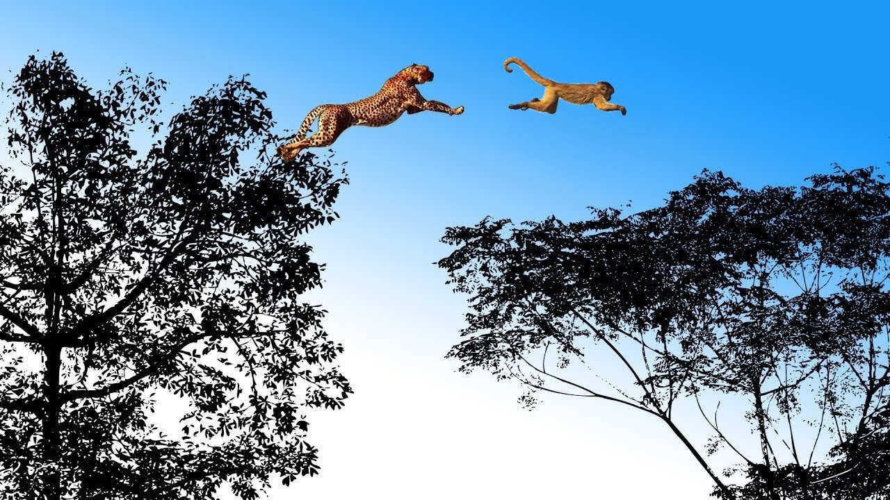 The LEOPARD, the most Agile and Deadly Big Cat  | Leopard vs Monkey, Warthog and other Animals