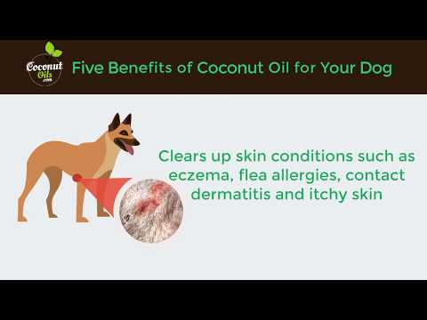 Five Benefits Of Coconut Oil for your Dog