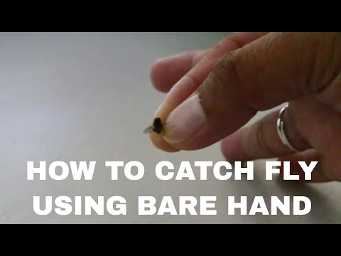 Catching a house fly with bare hand