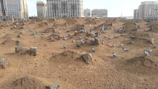Inside Jannat Al-Baqi - HD Video of Al-Baqi Madina