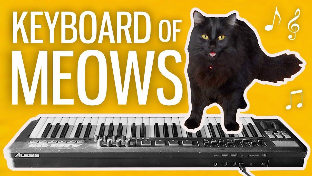 I Made a Keyboard From My Cat's Meows