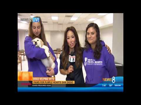CW 6 Highlights Paws for Purple Hearts