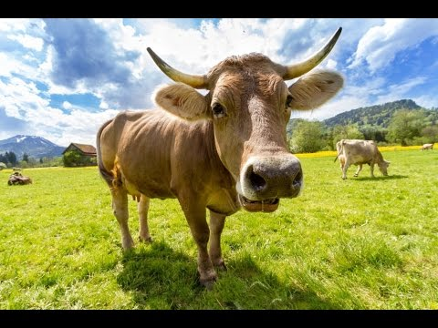 JavaScript execution order 03_cow