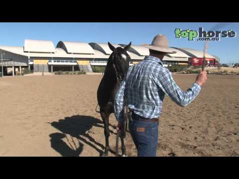 Australian Stock Horse - Introducing your horse to the stockwhip