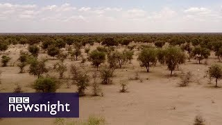 The Great Green Wall of Africa: Will it help fight climate change? BBC Newsnight
