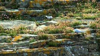 Orkney - wildlife
