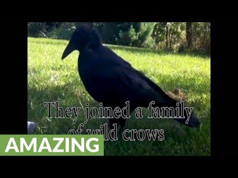 Talking wild crow actually speaks to squirrel at bird feeder