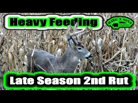 Bowhunting 2016 Illinois Late Season Whitetail Deer 2nd Rut First Snow
