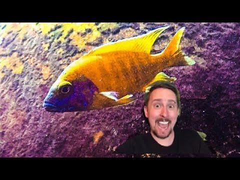 Favorite Aquarium Filters w/ Jay Wilson!