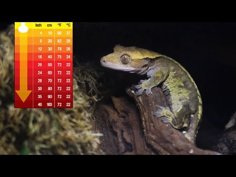 Heating A Crested Gecko's Tank In Winter!