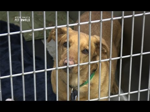 Steve Dale: Treating Kennel Cough
