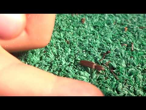 AwA Click Beetle