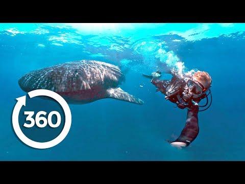 Protecting Ocean Anchor Species (360 Video)