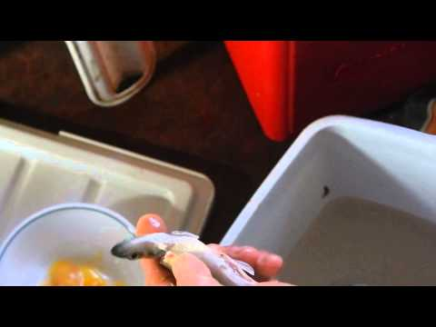 How to Clean a Smelt Fast & Easy