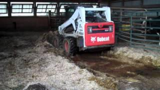 Bobcat S650 cleaning the heifer pen.