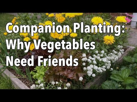 Companion Planting: Why Vegetables Need Friends