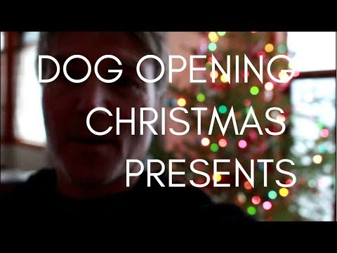 Dog Opening Christmas Presents