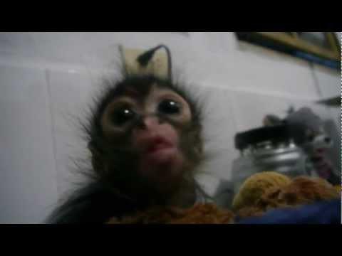 Baby Monkey Feeding Time
