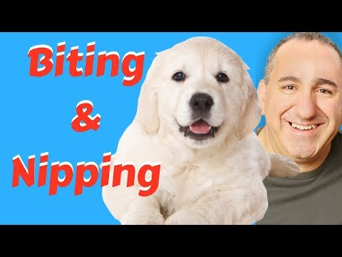 How to stop puppy biting - 2 simple solutions