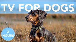 TV PARA PERROS! ¡Vídeos relajantes para entretener a tu perro!