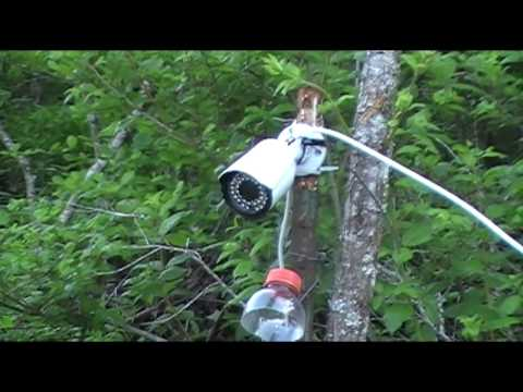 My camera setup for Beaver Trapping video - Sends a live video feed to my house.