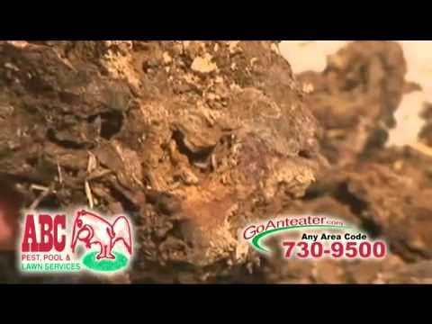 Get Rid of Termites in Your Houston Home with ABC Home & Commercial Services