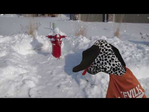 LFD On Call - Spot the Fire Dog 's Winter Fire Hydrants Safety