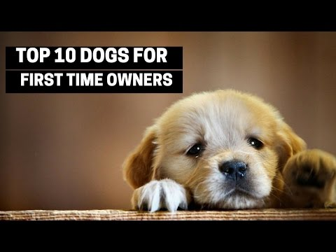 TOP 10 DOGS FOR FIRST TIME OWNERS - Best Puppy Breed For Novices