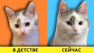 КАК РОСЛИ НАШИ ЖИВОТНЫЕ! Маленький КОТЕНОК Малыш, КОШЕЧКА МУРКА и КРОЛЯ БАФФИ! Смешные коты