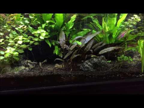 Happy New Year Around the World Fish tank Update