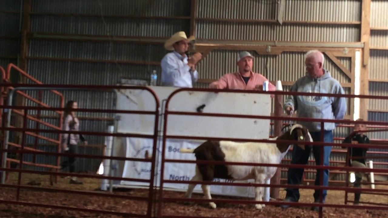Boer Goat Auction