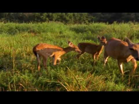 Deer Mothers  2012