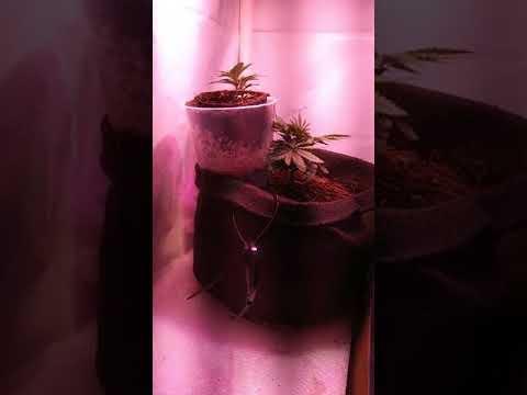 HIPARGERO LED Grow Light Review