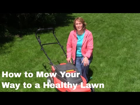 How to Mow Your Way to a Healthy Lawn