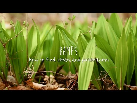 Wild Ramps: How to find, clean, and pickle them.